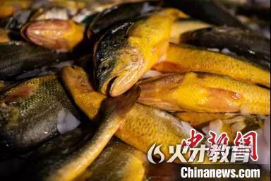 """浙江共富新观察:一条大黄鱼""""带富""""大陈岛"""