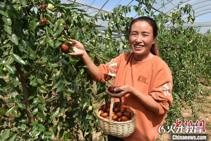 枣农正在采摘红枣。刘生锋 摄