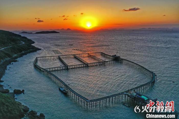 大陈岛大型铜网衣围海养殖大黄鱼 潘侃俊 摄