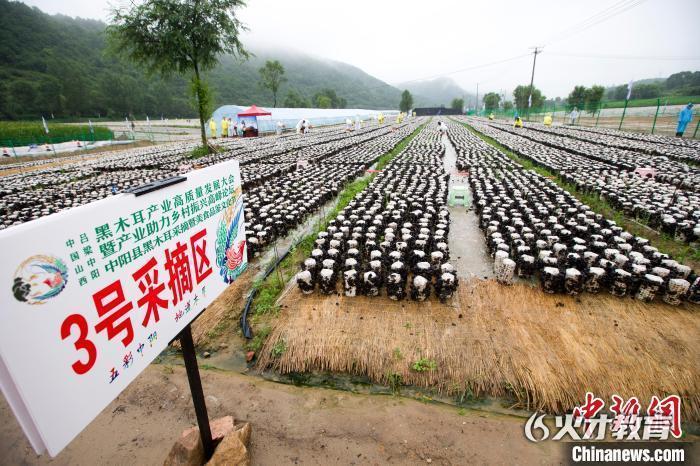 黑木耳产业已成为中阳富民强县的农业特色产业。张云 摄