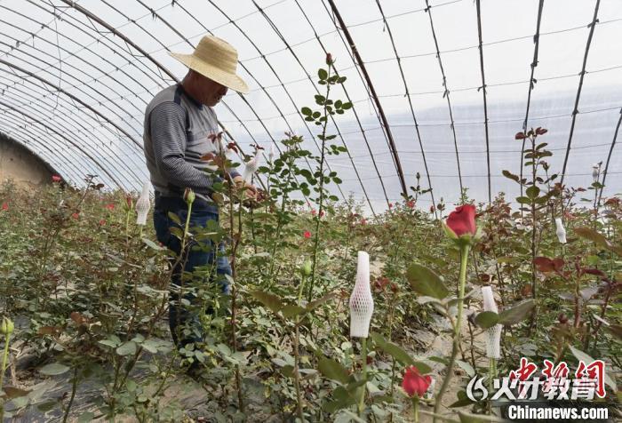 图为村民在大棚打工,每月收入约3000元。刘玉桃 摄